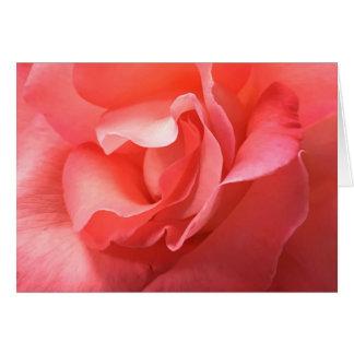 Card a rich peach/pink rose close-up soft petals