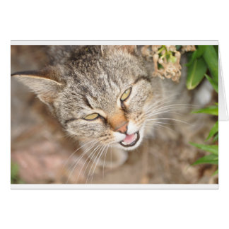 Card Furry Friend- Fawn Tiger Stripe Cat.