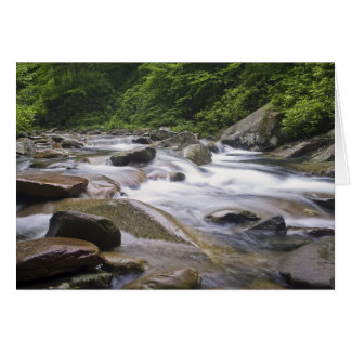 Card - Little Pigeon River, Great Smoky Mtns NP -