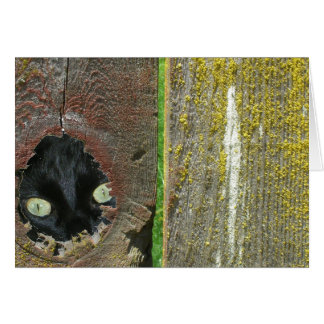 Card - Note - black cat peeking