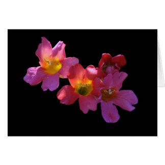 "Card, ""Sun Shining Through Mandevilla Blossoms"" Note Card"