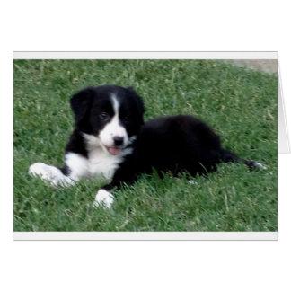 card vertical border collie puppy