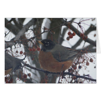 Card with Robin in the winter.