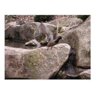 Card: Z Postcard: Nature Kubota Park, Seattle, WA Postcard