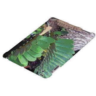 Cardboard Palm (Cardboard Plant)