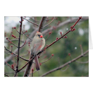 Cardinal 4539 Card