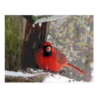 Cardinal at the Feeder Postcard