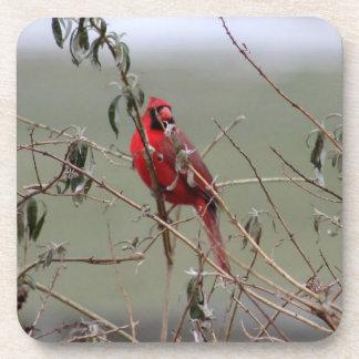 cardinal bird - coasters