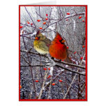 Cardinal Christmas Greeting Card