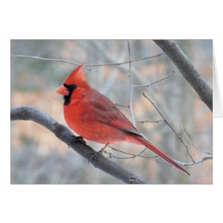 Cardinal Creek Profile Greeting Card