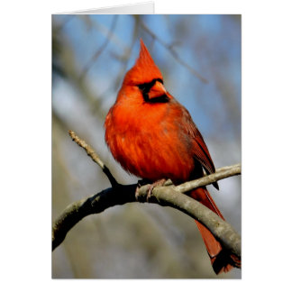 Cardinal Crest Card