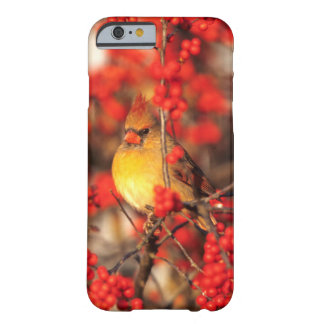 Cardinal female and red berries, IL Barely There iPhone 6 Case