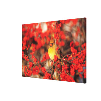 Cardinal female and red berries, IL Canvas Print