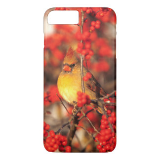 Cardinal female and red berries, IL iPhone 7 Plus Case