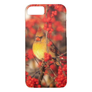 Cardinal female and red berries, IL iPhone 8/7 Case