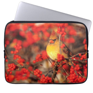 Cardinal female and red berries, IL Laptop Sleeve