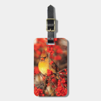 Cardinal female and red berries, IL Luggage Tag