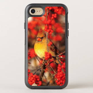 Cardinal female and red berries, IL OtterBox Symmetry iPhone 8/7 Case