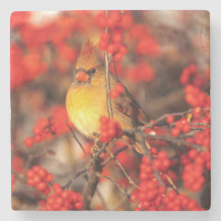 Cardinal female and red berries, IL Stone Beverage Coaster