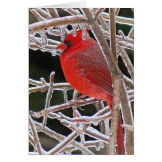 Cardinal Ice Card