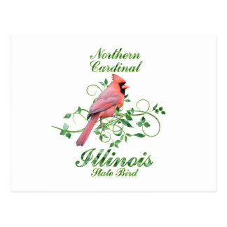 Cardinal Illinois State Bird Postcard