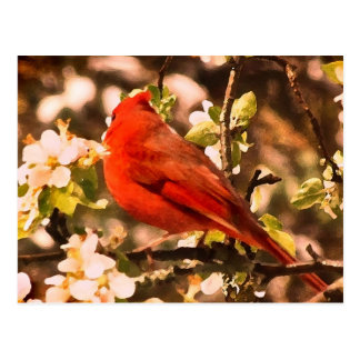 Cardinal in Apple Blossoms Postcard