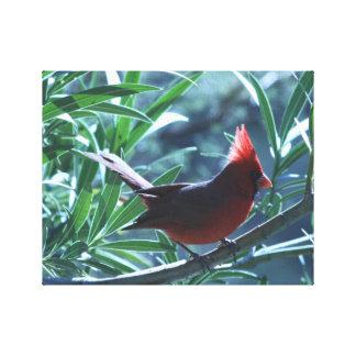 Cardinal in Oleander Canvas Prints
