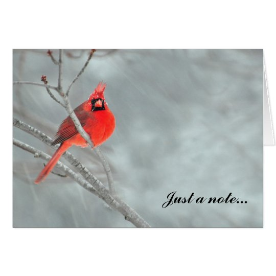 Cardinal in Snow Card