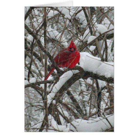 Cardinal in Snow Christmas Card