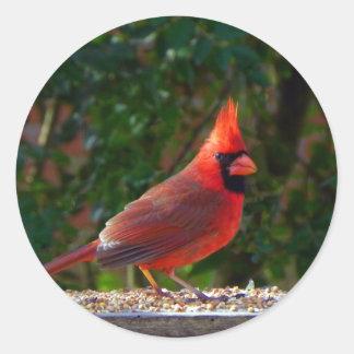 Cardinal in Sunlight Round Sticker