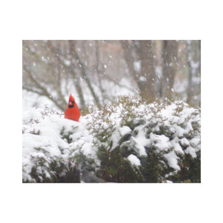 Cardinal in the Snow Gallery Wrap Canvas