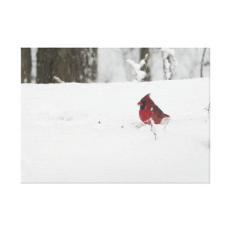 Cardinal in the Snow Gallery Wrapped Canvas
