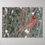 Cardinal in Tree Print