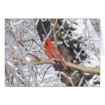 Cardinal 'n Ice Greeting Card