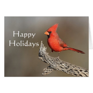 Cardinal on a cholla rib, Happy Holidays Card