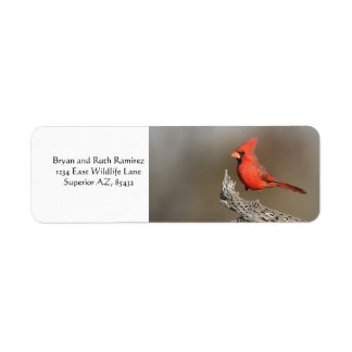 Cardinal on a cholla rib return address label