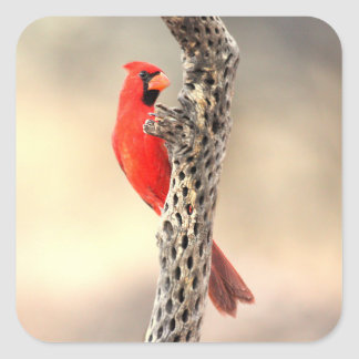 Cardinal on a cholla rib square sticker