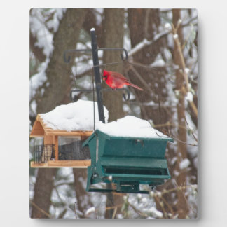 Cardinal on Birdfeeder Plaque