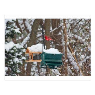 Cardinal on Birdfeeder Postcard