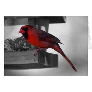cardinal on birdhouse card