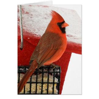 Cardinal on Feeder Card
