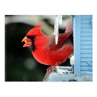 Cardinal on Ice - Bird Postcard