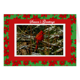 Cardinal on Snow Covered Branch Christmas Card
