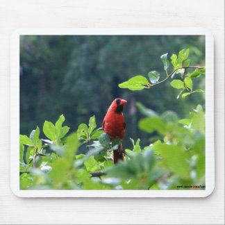 Cardinal on Uncle Seth's Pond, Orleans, MA Mouse Pad