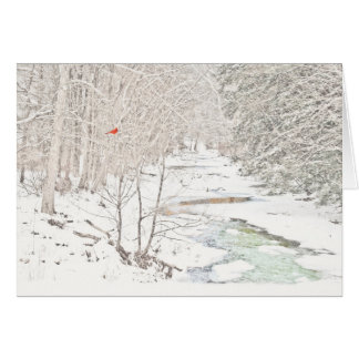 Cardinal on Winter Creek (Blank inside) Card