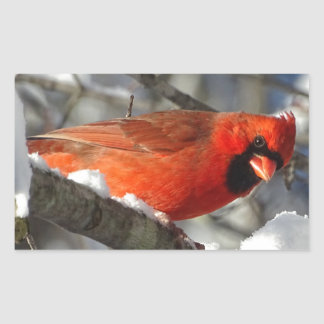 Cardinal Rectangular Sticker