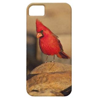 Cardinal, Richmondena cardinalis, South Eastern iPhone 5 Covers