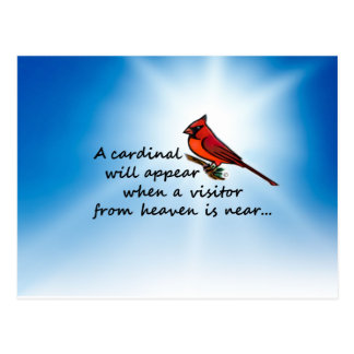 Cardinal, Visitor from Heaven Postcard