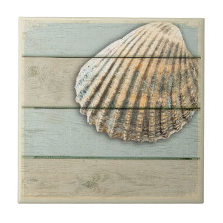 Cardita Shell Ceramic Tile