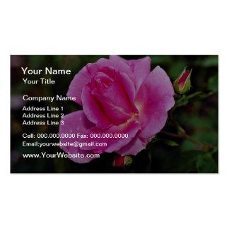 Carefree Beauty Shrub Rose 'Bucbi' White flowers Business Card Templates